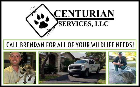 Temple Wildlife Removal Your Local Temple Tx Nuisance